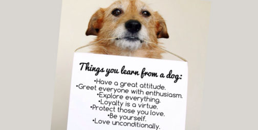 Things we can learn from dogs
